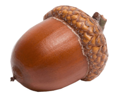 Sideview Acorn PNG Image