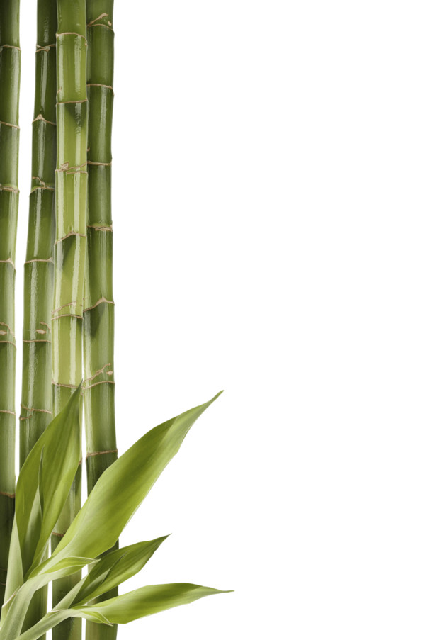 Bamboo Left Side PNG Image