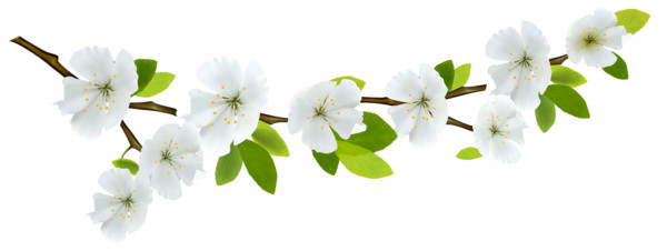 Branch and Flowers PNG Image