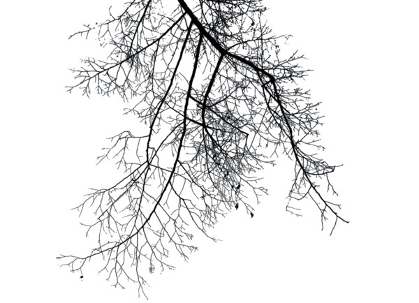 Branch Deco Up Light PNG Image
