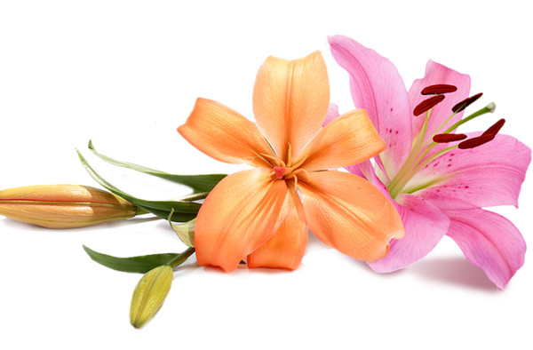 Wedding flowers  PNG Image