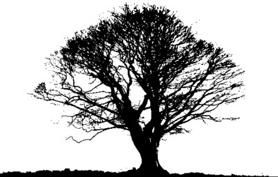 Black Tree Photos - Download on PNGPX