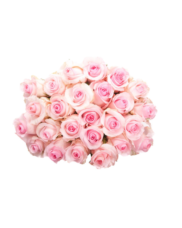 Pink Roses Flowers Bouquet PNG Image