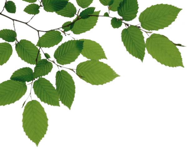 Tree Branch File PNG Image