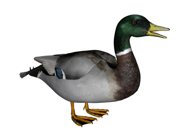 Duck  2 - Download on PNGPX