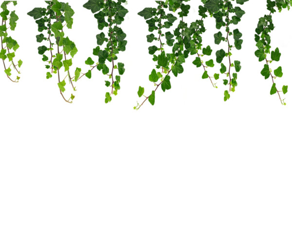 Real Leaves File PNG Image