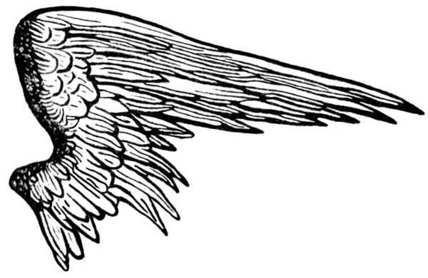 Half Wings Picture    PNG Image