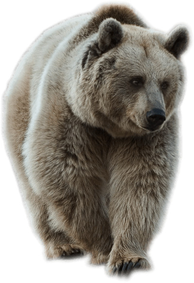 Grey Sideview Bear PNG Image