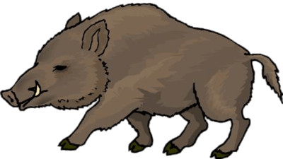 Boar Drawing PNG Image