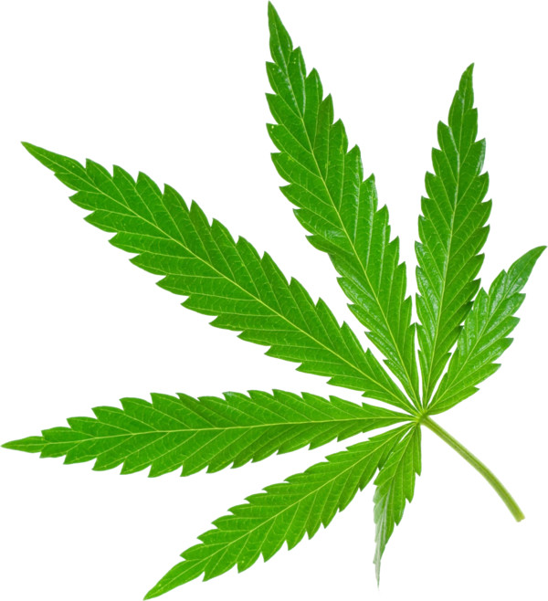 Cannabis  - Download on PNGPX