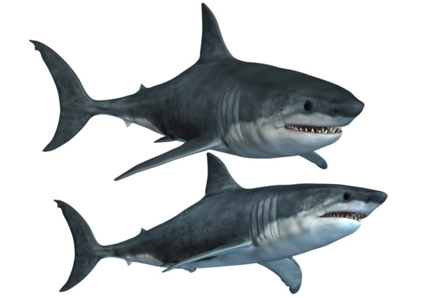 Shark  Hd - Download on PNGPX