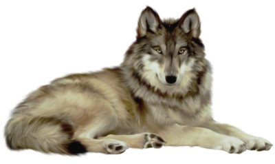 Wolf  File PNG Image