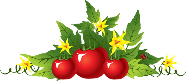 Picture Tomato   - Download on PNGPX